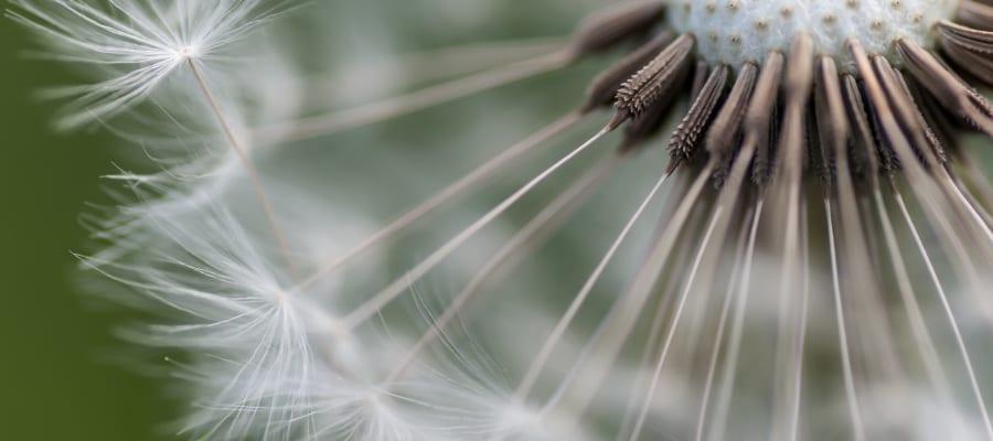 Blomsterfaglig konseptutvikling og ledelse